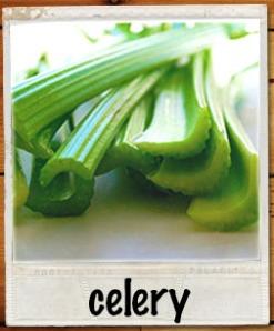 celerypolaroid