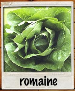 romainepolaroid