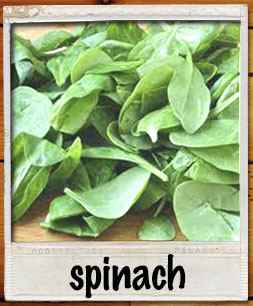 spinachpolaroid